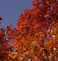 秋 ホテルを鮮やかな紅葉に囲まれる美しい時期