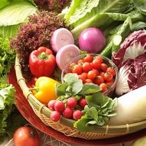 高原リゾートならではの厳選の新鮮野菜