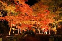 ★紅葉[夜]