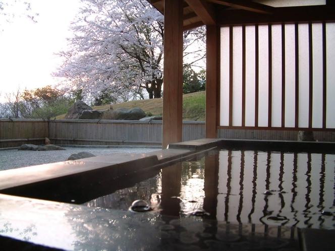 4月中旬、本館地下一階の露天風呂より桜を眺める
