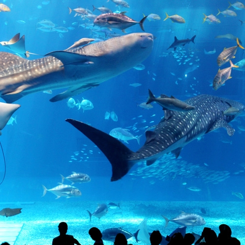北部「美ら海水族館」
