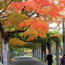 秋 公園2