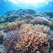 *ダイビング/世界屈指の生態系豊かな自然の海へご案内♪