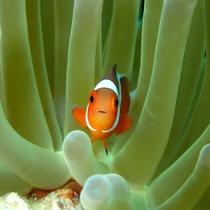 *ダイビング/海の中では小さな熱帯魚にもごあいさつ♪