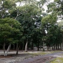 林の中のテントサイト