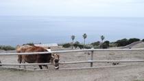*【サンメッセ日南】牧場の向こうは大海原