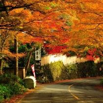 秋は紅葉を見に