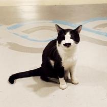 *看板猫「ぶち」/当館の看板猫をご紹介♪