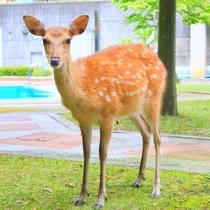中庭に鹿が遊びに来ることも・・・!