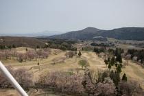 松が峰の桜と残雪の妙高山