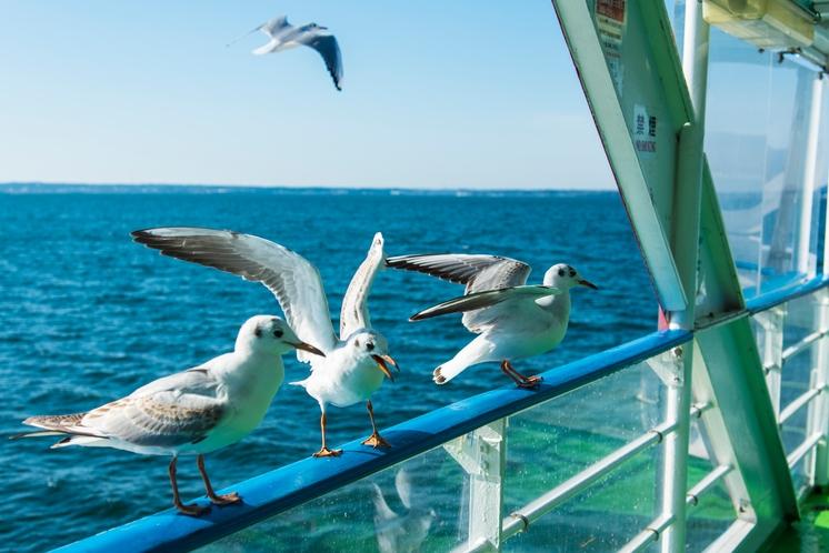浜名湖遊覧船とカモメ