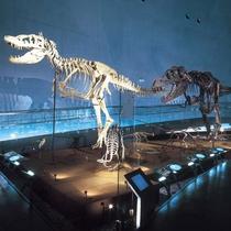 【恐竜博物館】福井で超人気のスポット!迫力の恐竜に圧倒!