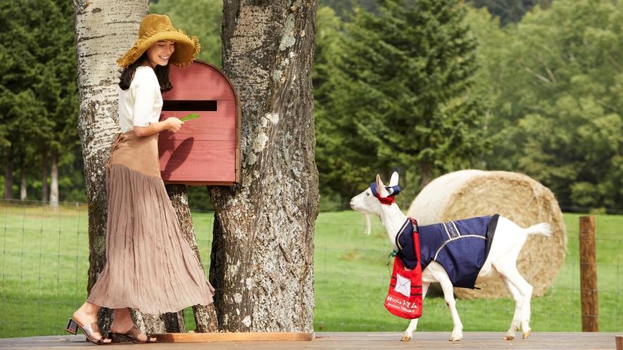 【ファーム星野】ヤギの郵便屋さん
