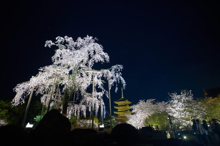 Light up at Toji