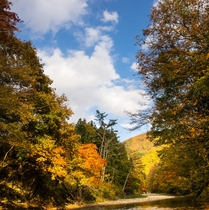 男鹿川と紅葉 ドローン撮影