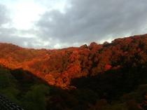 朝焼けに映える近隣の紅葉 20161112