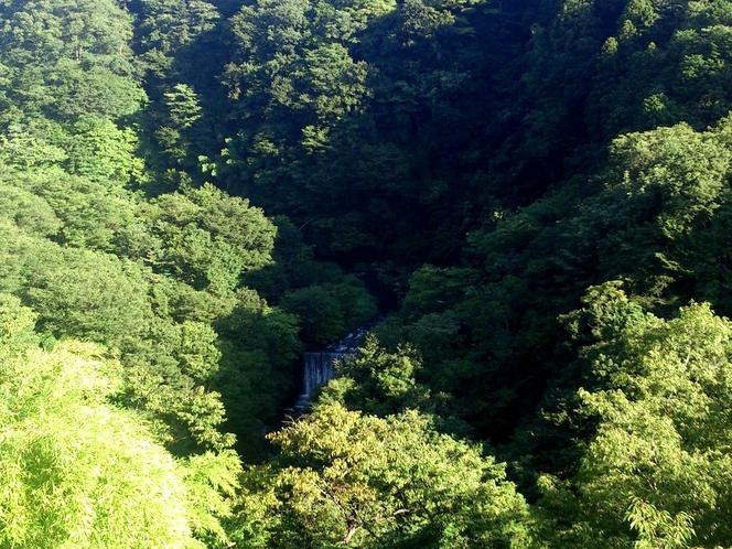 夏の早川渓谷