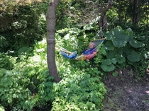 庭園の池の傍の木陰でのんびりとハンモックで昼寝