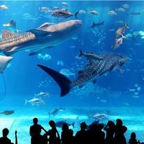 美ら海水族館500