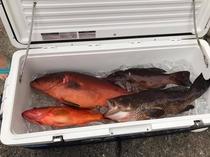 魚つり大漁です!釣ったお魚で手料理いかがでしょうか。