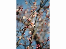 敷地内には、沢山の季節の花々が咲いており、季節ごとに変わる風景もお楽しみいただけます。
