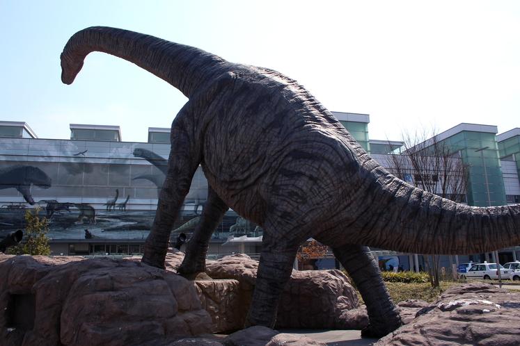 恐竜の化石が数多く発見されている福井県の中心地福井駅でも恐竜に会えます!