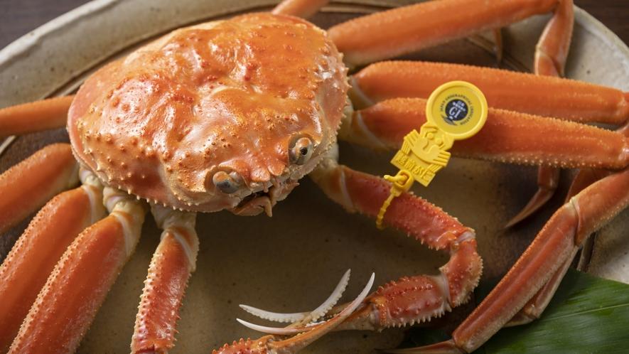 黄色タグはブランド蟹「越前蟹」の証です!