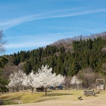 里山の風景(春)