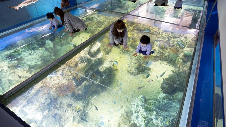 見て触れて学びながら楽しめる、お子様に人気の越前松島水族館
