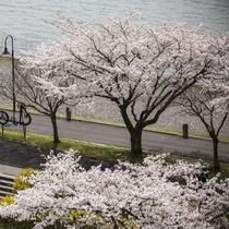 ■萃 春の桜風景