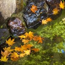 ■秋 庭園内の池
