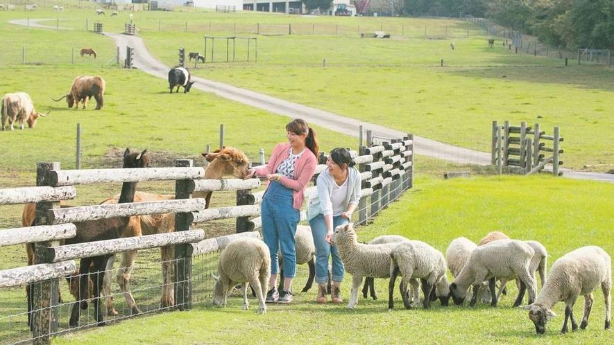 **【マザー牧場(イメージ)】かわいい動物たちに会いに来てください♪