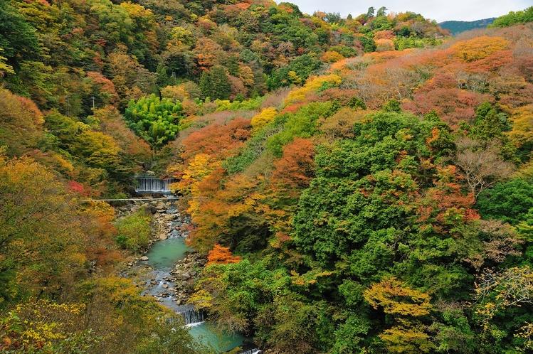 箱根 宮ノ下の紅葉