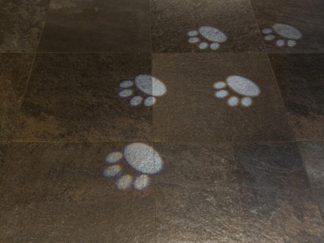 狸?の足跡