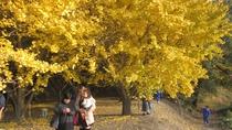 *鮮やかな黄色に染まるイチョウの並木道。垂水の名所です!