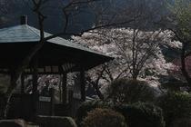 外観 桜の季節