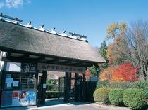 秋保大滝植物園