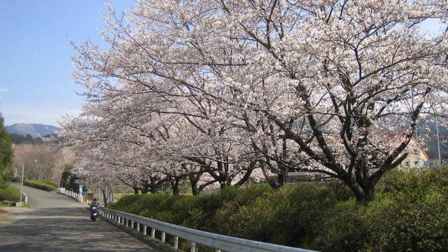 *【ゆのまえグリーンパレス】春にはたくさんの桜をご覧いただけます。