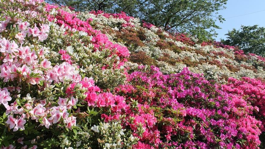 *【ゆのまえグリーンパレス】季節毎にたくさんのお花が咲きます。
