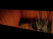 バスルームから眺める坪庭