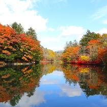 雲場池/湖面に映る四季折々の自然が美しい軽井沢の必見の名所。秋の紅葉は特におすすめ。