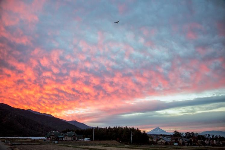 散歩道から一望 朝焼けで赤く染まる霊峰富士