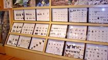 *【かぶと・くわがたわくわく館】多数の昆虫標本を展示