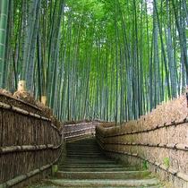 一度は見ておきたい嵐山の竹林