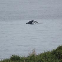 冬期・クジラ(テラスにて)