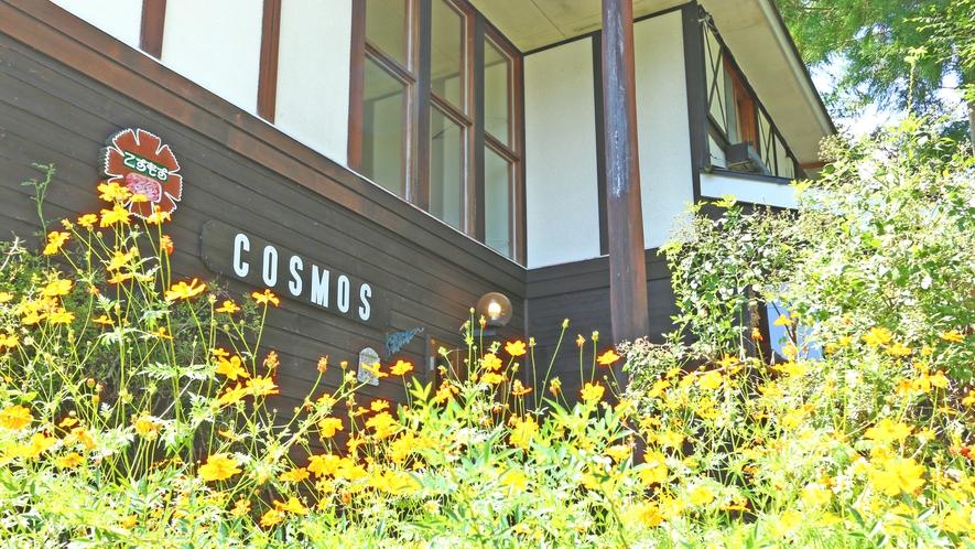 ◆宿の周りをコスモスが囲っています♪