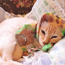*民宿 暖心の愛猫(ジブラ)です♪