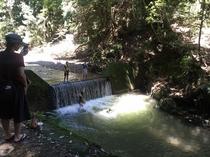 西芳寺川で飛び込み