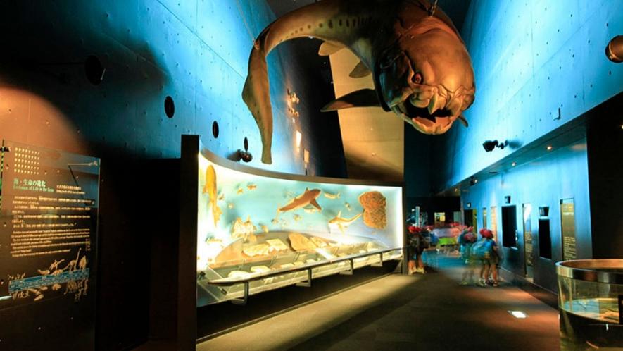 【アクアマリンふくしま(いわき市)】東北最大級の体験型水族館。スケールの大きい展示がいっぱい!