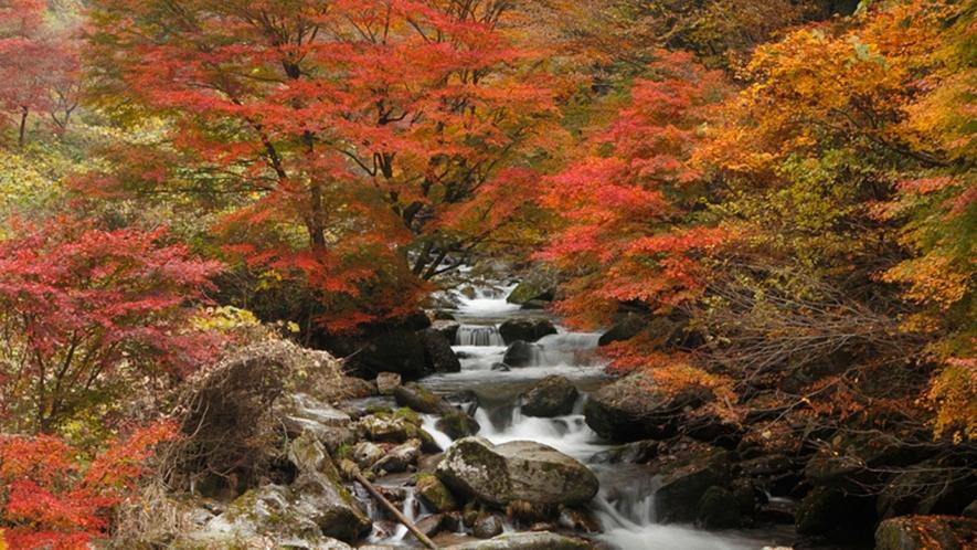 【 那倉川渓谷(塙町)】県道27号線沿いを流れる自然豊かな渓谷。 紅葉の美しさが有名です。